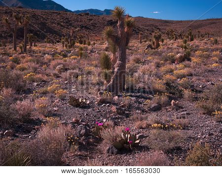 Death valley one of the hottest regions on Earth with temperatures soaring past 135 degrees fahrenheit.