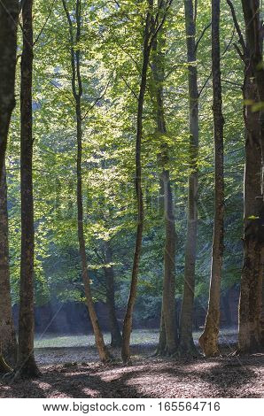 underbrush in summer with the sun's rays filtering through the trees
