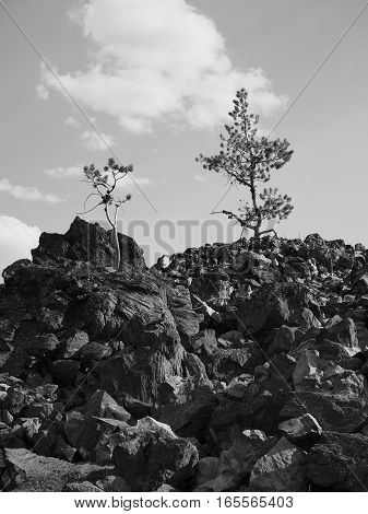 Trees somehow find a way to grow in the Big Obsidian Flow in the Newberry National Volcanic Monument in Central Oregon on a sunny fall day.