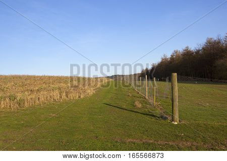 pheasant cover and enclosures with woods and fencing in a yorkshire wolds hunting landscape under a clear blue sky in winter