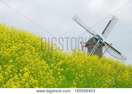 Mill on dike with bright yellow flowers.