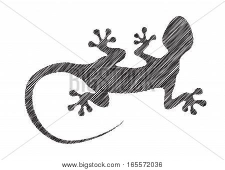 Gecko vector in hatching style. Simple illustration of a reptile - the gecko, but can be also used to depict salamander or other lizard. The lacertian looks like hand drawn sketch. Amphibian clipart, isolated on white.