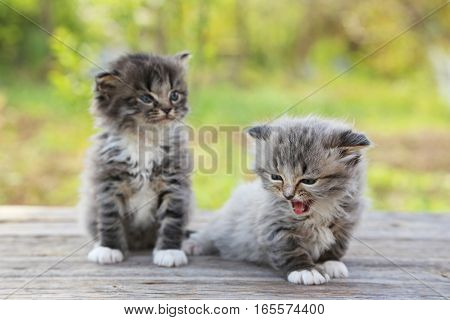 Small kittens on the wooden table, outdoors