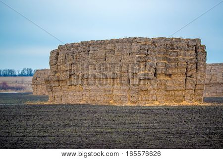 Huge stack of straw packs on a field of farmer