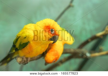 Colorful yellow parrot sitting on a branch