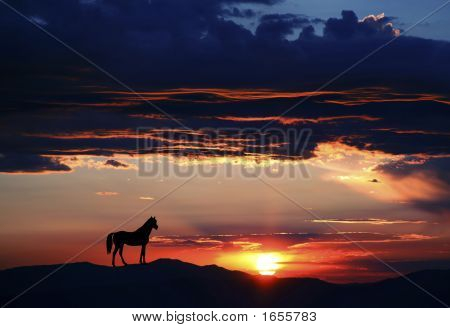 Horse Silhouette 2