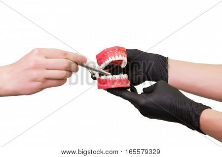 Male hand pointing at dental jaw model dentist's hand hold, isolated on white , close-up.
