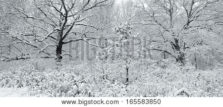 A snowstorm leaves the forest coated in white.
