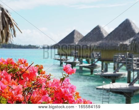 Floral image foreground with overwater bungalow background