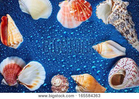 Marine items and seashells on wet blue background