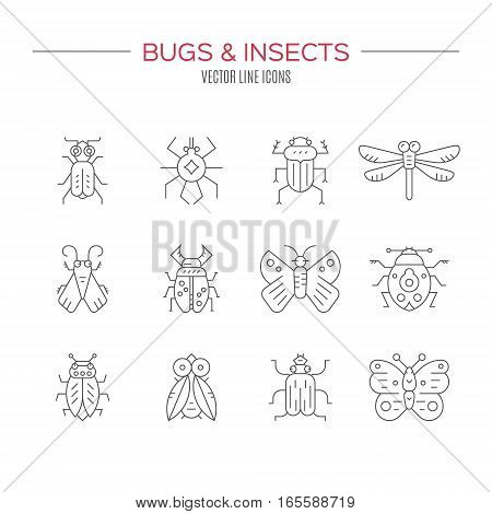 Set of bug line vector icons. Thin line symbols of different insects. Creatures geometrical design element isolated on white background.