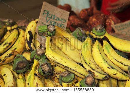 bunch of bananas for sale bunch of bananas for sale