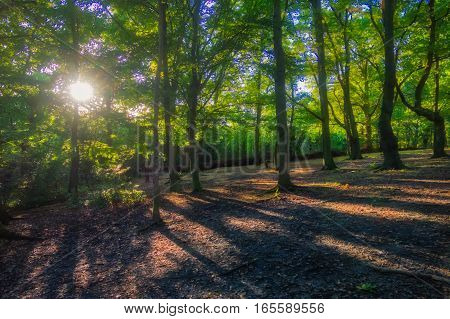 Sunrays in the forest in spring in England