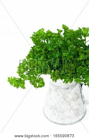 Curly or Curled Parsley on white. Selective focus.