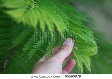 Girls hand and Bright green leaves in garden. Selective soft focuse and boke on background