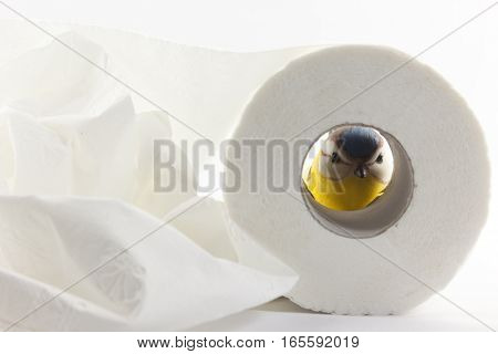 an artificial tit with toilet paper in front of white background