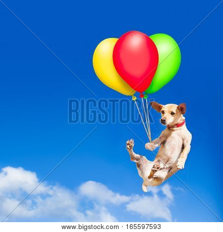 Dog Hanging On Balloon In  Air