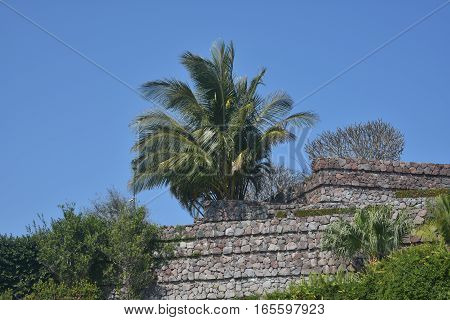 Palm tree in a garden with masonry walls in veracruz