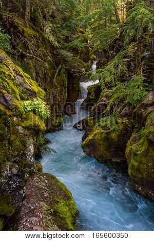 Moss Covers the Rocks of Avalanche Creek in Montana wilderness