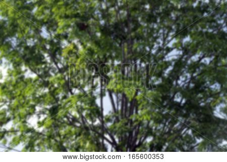 green blurred of nature background, Abstract nature background ,Blurred park, natural background , green bokeh natural background , abstract nature background not in sharpness