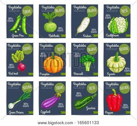 Vegetables price cards. Farm fresh organic green pea, kohlrabi, daikon radish, red beet and cauliflower, pumpkin, broccoli, squash and onion, eggplant and zucchini, pepper. Healthy vegetarian food tags for grocery shop