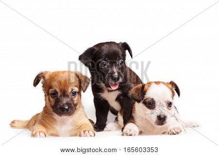 Three cute puppy. Pets need our support and care. The owner search.