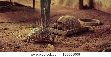 old turtle in the zoo, vintage style