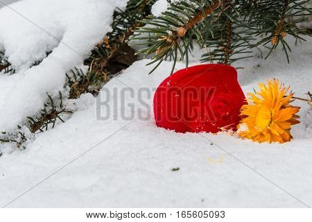 Red box for engagement ring and yellow dry flower in the snow against the background of snow-covered fir branches