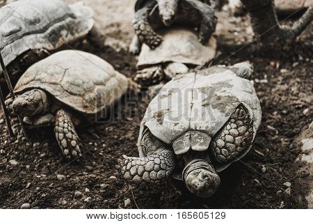turtes turn over in the zoo with dark tone