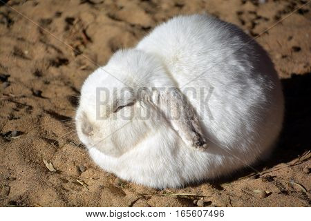 Rabbits are small mammals in the family Leporidae of the order Lagomorpha, found in several parts of the world.