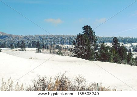 Scenic winter landscape with snow covered fields, tall grass and trees in foreground.  Trees, hills and bright clear blue sky background.