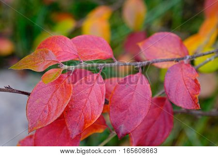 Red Leaves In Autumn