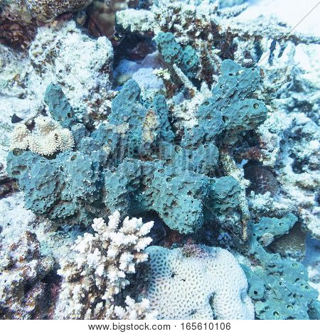 Coral reef with green sea sponge at the bottom of tropical sea underwater
