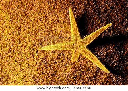Starfish on sands