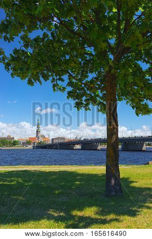 Green maple tree on the waterfront of the Daugava River in the background of the bridge and panorama of Riga in the summer sunny day