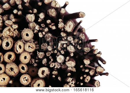 Background of cross section thin brown wooden branches annual rings top view.