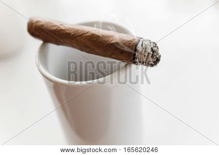 Handmade Cigar Lays On White Cup