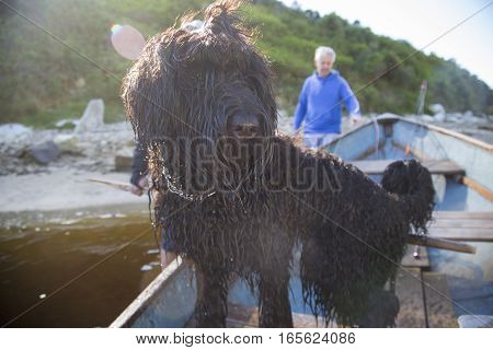 Black Russian Terrier Puppy on a river boat with her family.