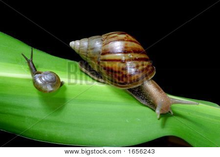 snail's mother and son are looking for their father poster
