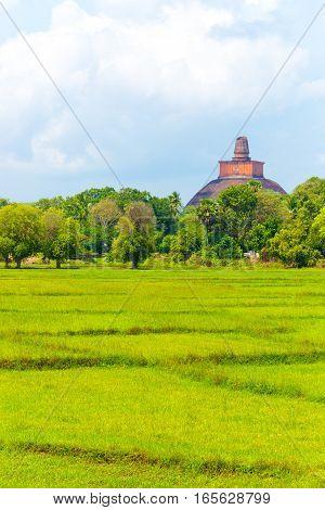 Anuradhapura Jetavanaramaya Stupa Distant V