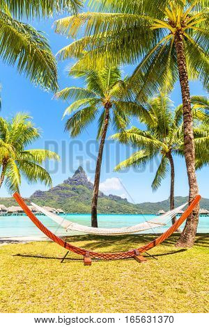 Empty hammock between palm trees. Holiday and vacation concept nertical composition