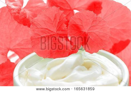 Centella Asiatica Leaves And Skincare Product In Red And White Tone.