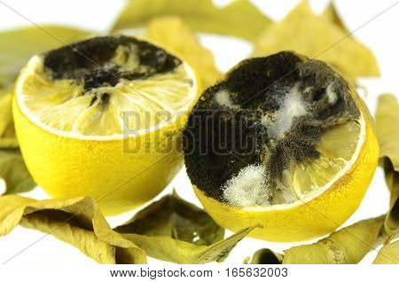Rotting Lemon Fruit With Black Mold And White Mold.
