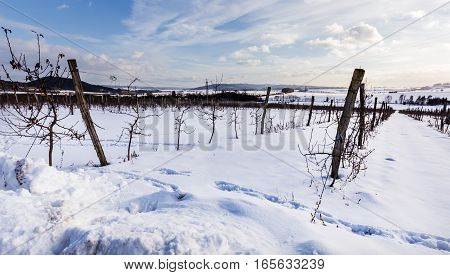 Snowy apple orchard in the Moravian landscape Lysice.