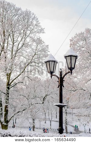 Street lantern with brunches in snow - beautiful cold winter day in January Riga latvia