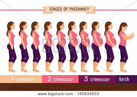 Pregnancy stages flat vector illustration. Pregnant woman and birth newborn trimester infographics. Pregnant and newborn, woman belly figure during pregnancy poster