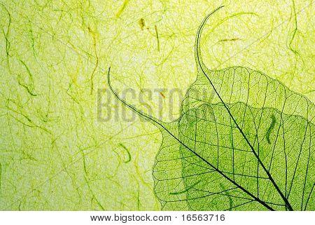 Green leaf on plant fibre background.