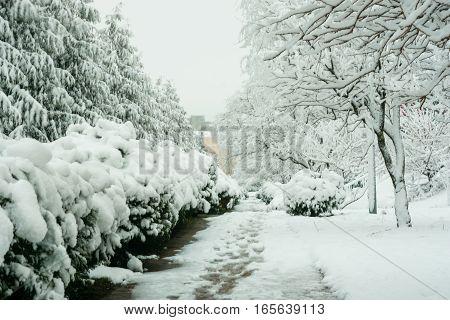 Walk The Snowy Winter Day In The Resort Village Vityazevo, Krasnodar Region