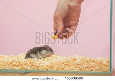 She feeds the hamster cheese close up