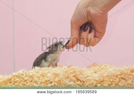 She feeds the hamster seeds close up